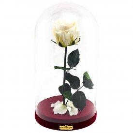 Biała Wieczna Róża Beauty & The Beast