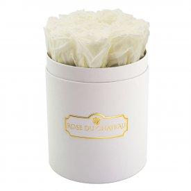 Białe Wieczne Róże w Białym Małym Boxie