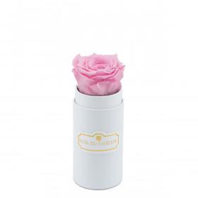 Bladoróżowa Wieczna Róża w Białym Mini Boxie