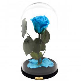Błękitna Wieczna Róża Beauty & The Beast