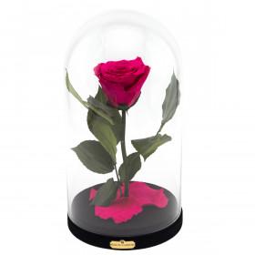 Różowa Wieczna Róża Beauty & The Beast