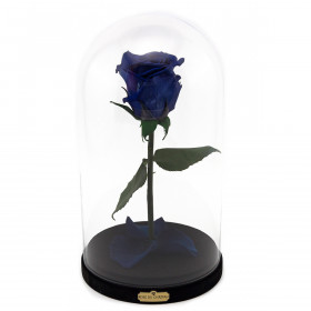 Blue Enhanced Rose Beauty & The Beast