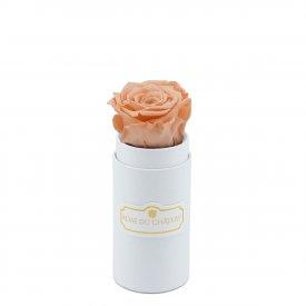 Čajová věčná růže v bílém mini flowerboxu