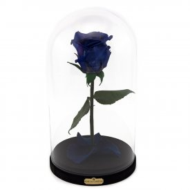 Tmavá modrá věčná růže beauty & the beast