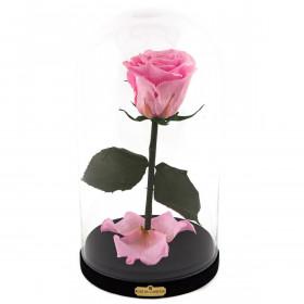Světla růžová věčná růže beauty & the beast