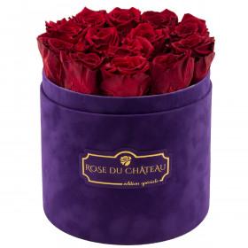 Rote ewige rosen in violetter beflockter Rosenbox